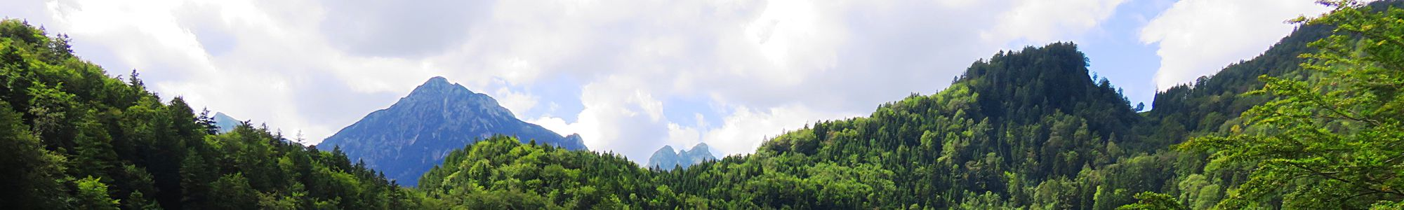 Trees in in front of a mountain
